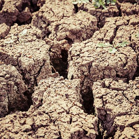 catastrophe écologique et sécheresse